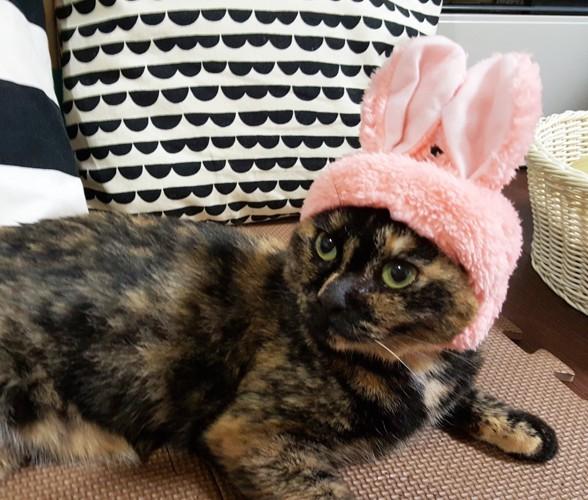 うさぎの帽子をかぶる猫