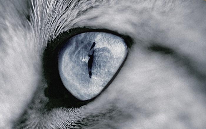 猫の瞳モノクロ
