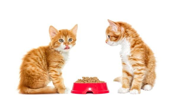 餌を前にする2匹の子猫