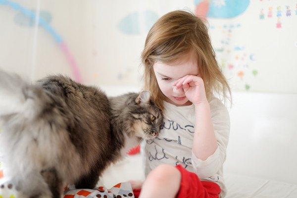 泣いている女の子にすり寄る猫