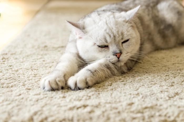 両手を伸ばして眠る猫