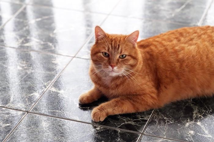 大理石の床でくつろぐ茶トラ猫