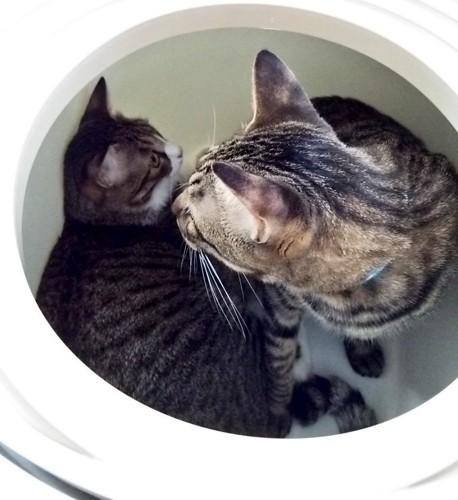 トイレの中で遊ぶ猫達