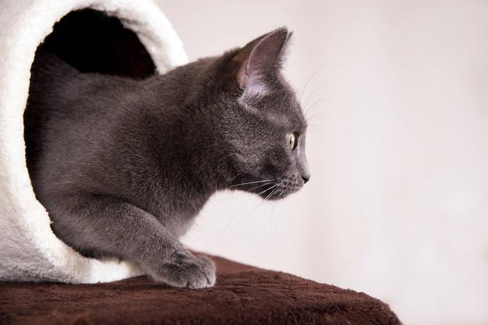 白いトンネルから出てきたグレー猫