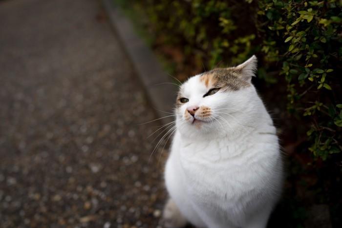 迷惑そうな猫