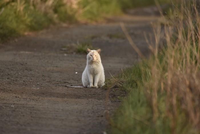 道の真ん中で寂しそうに座る猫