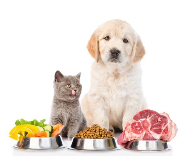 犬と猫の前に置かれた様々な食材