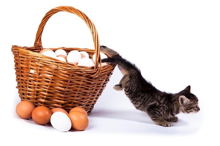 卵の中から出る猫