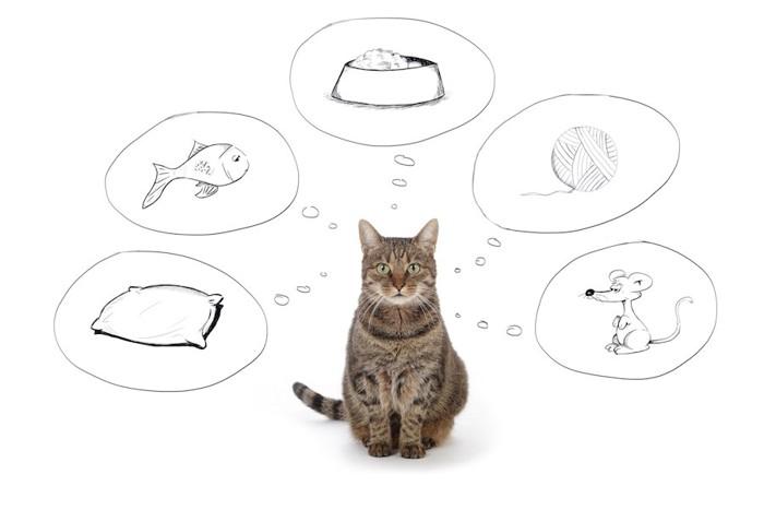 いろんなことを考えている猫