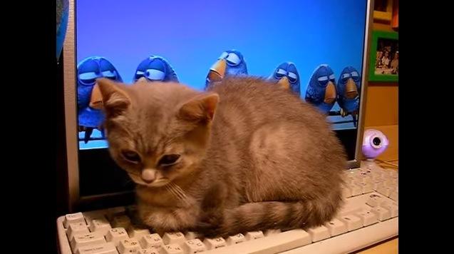 キーボードの上に座る猫