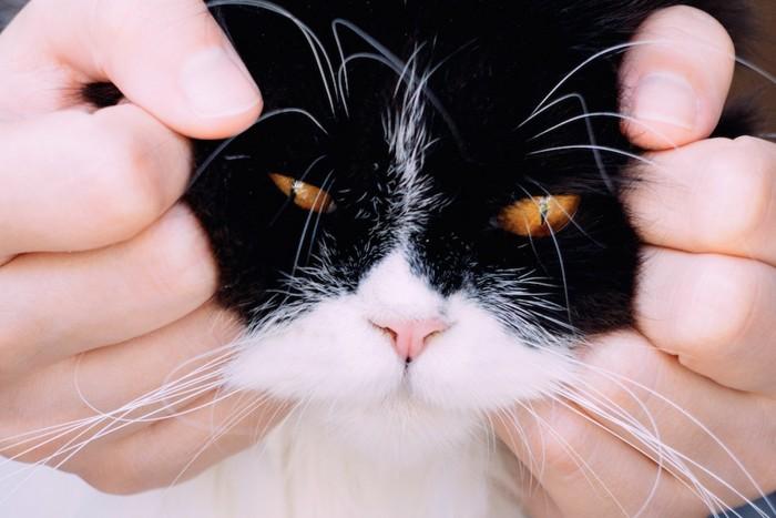 猫の顔を掴む人の手