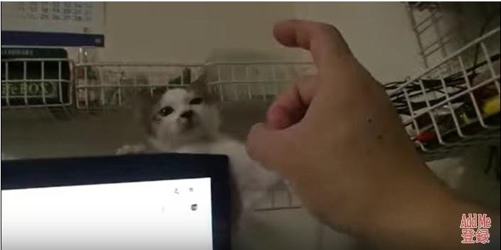 後ずさりする子猫