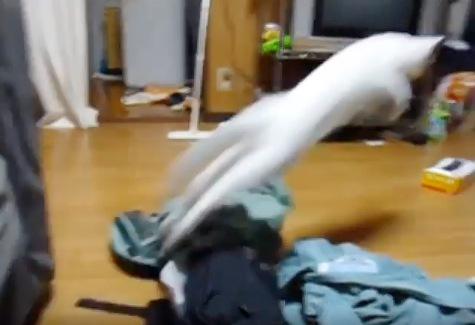 そのまま前へ飛び出す猫