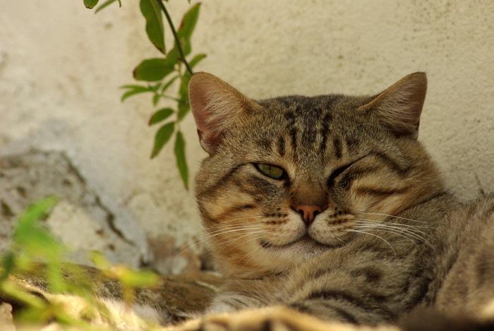 外でウインクする猫