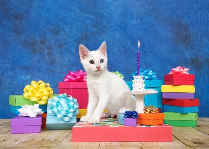誕生日会の猫