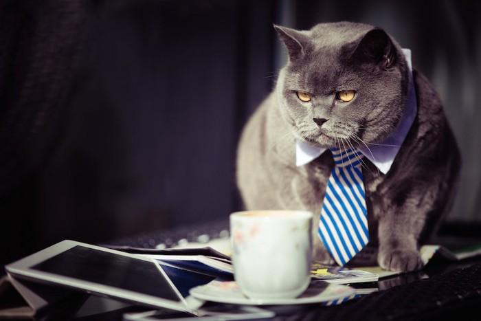 渋い表情のネクタイをしたグレーの猫
