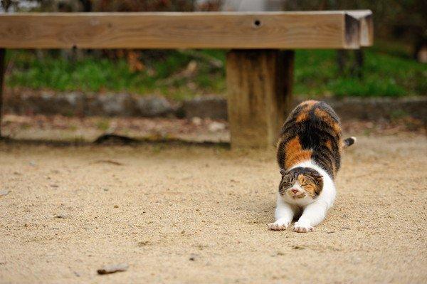 外で伸びをする猫