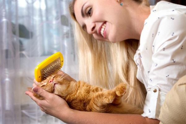 飼い主のブラッシングを喜ぶ猫