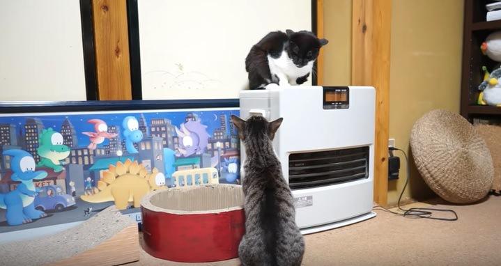 ストーブの上の黒猫と下から見上げるキジ白猫