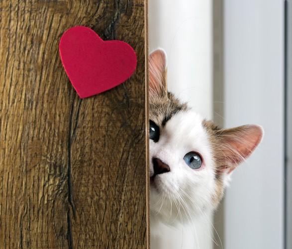 ハートのついた壁から見つめる猫