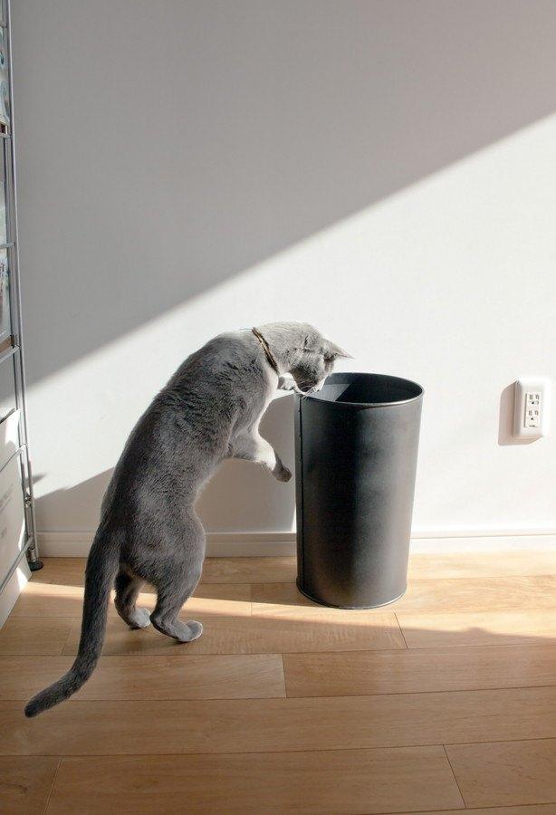 ゴミ箱をのぞく猫