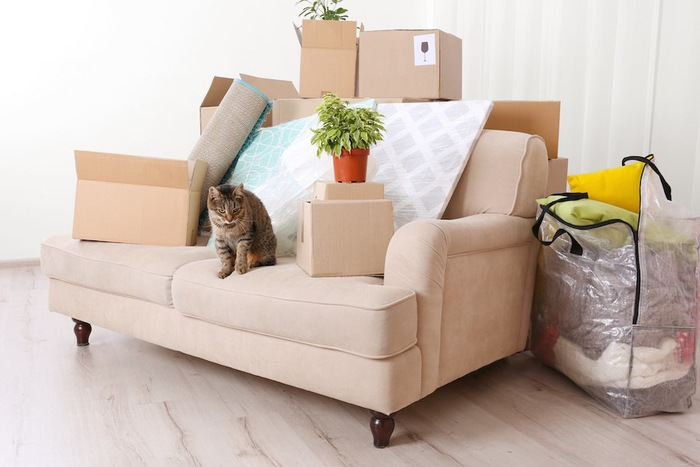 新居のソファーに座る猫とダンボール箱