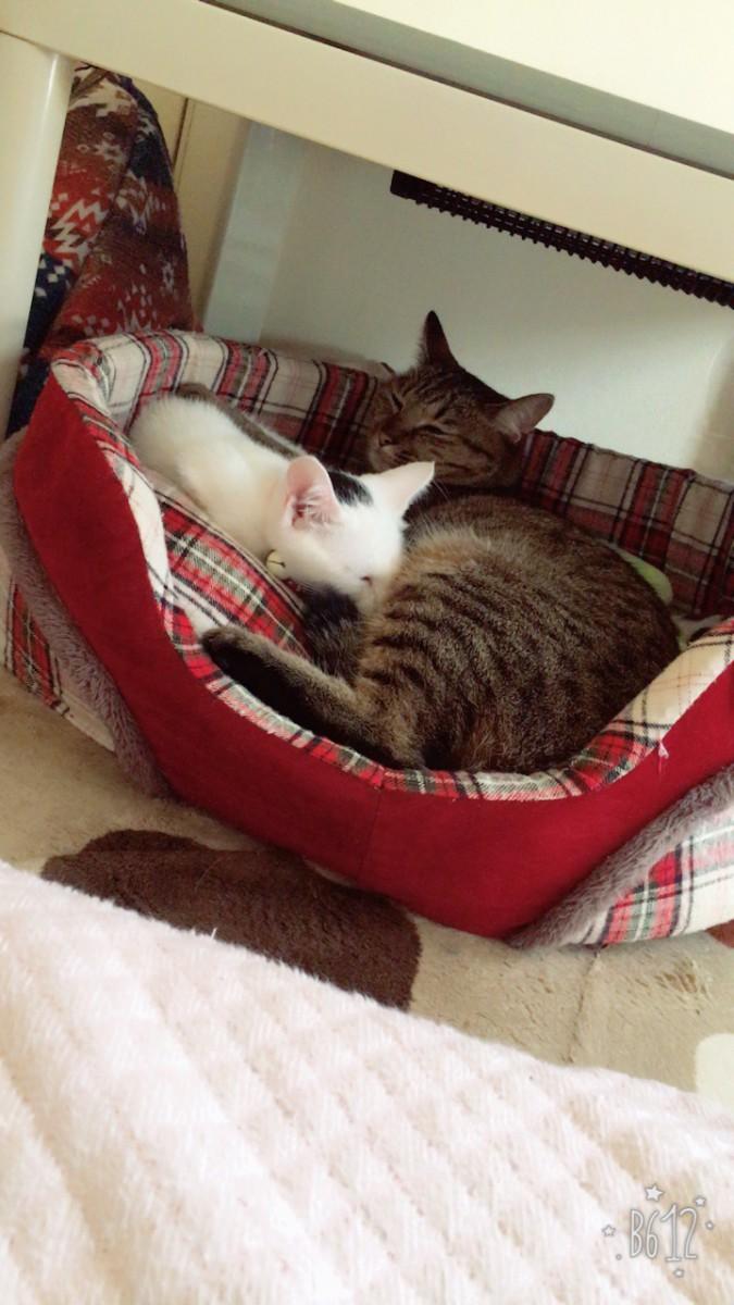 一緒に寝る兄妹
