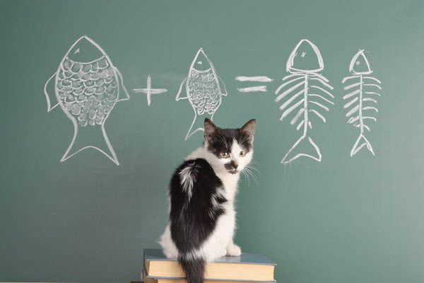 振り返る黒板の前にいる猫