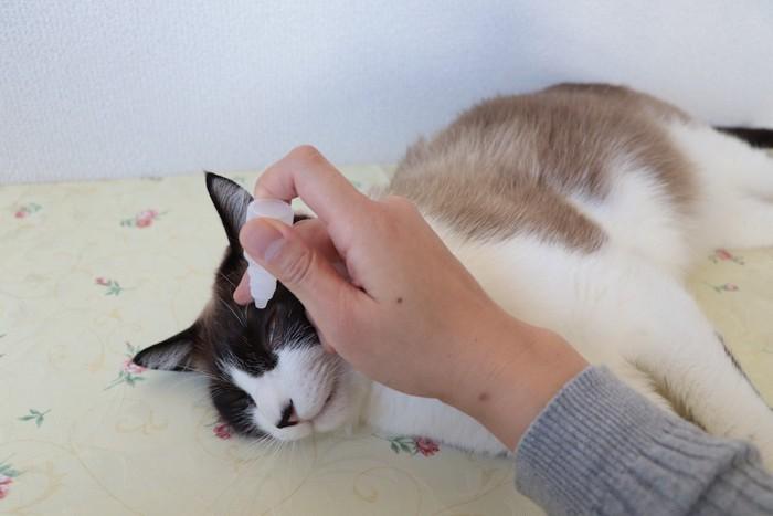 横になって目薬をされる猫