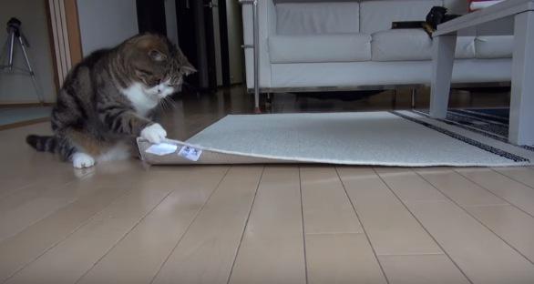カーペットの下をチェックする猫