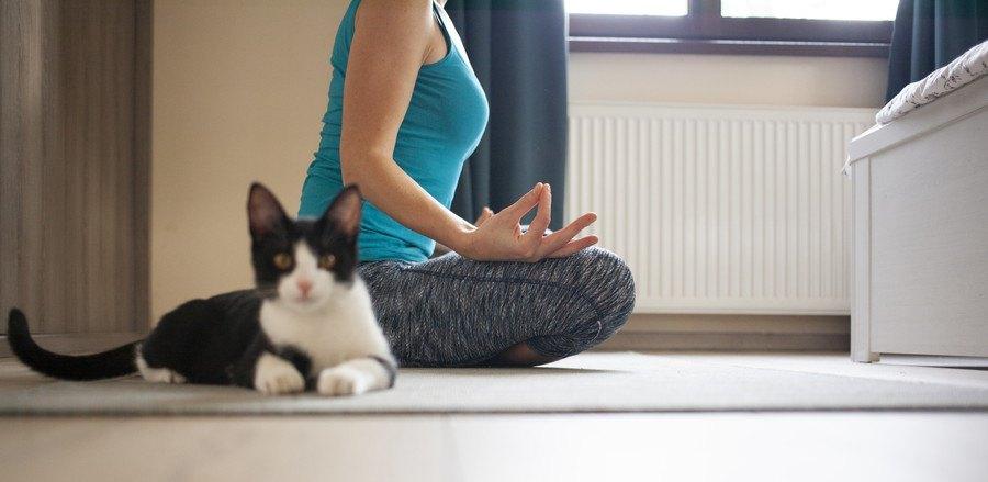 ヨガをする人の横に座る白黒の猫