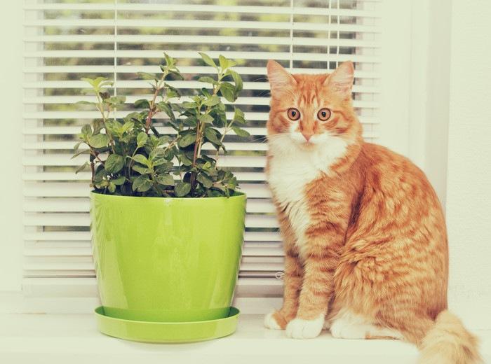 ミントと猫