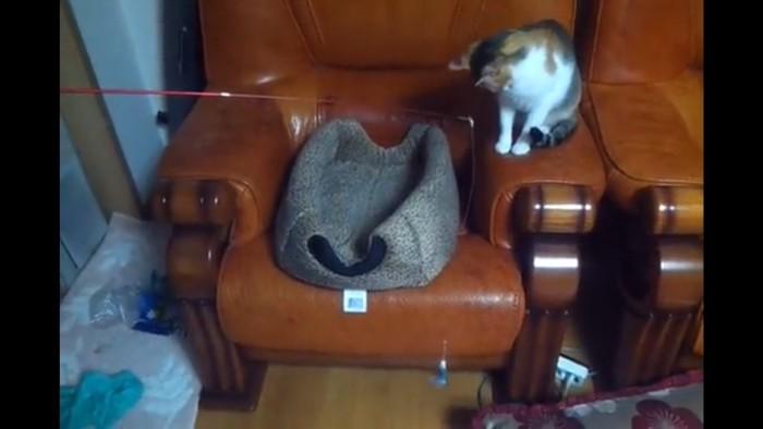 釣り竿をみる猫