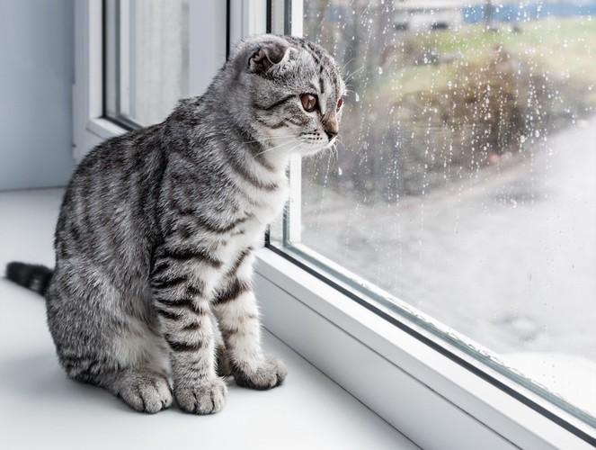 窓からのぞく猫