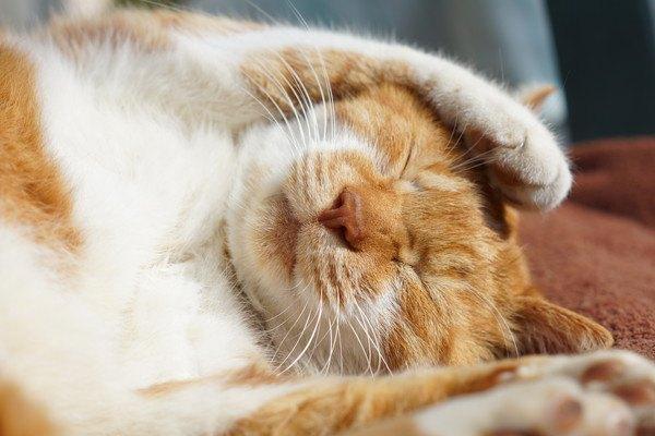 102644291 眠る猫の写真