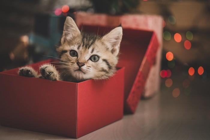 プレゼント箱に入る子猫