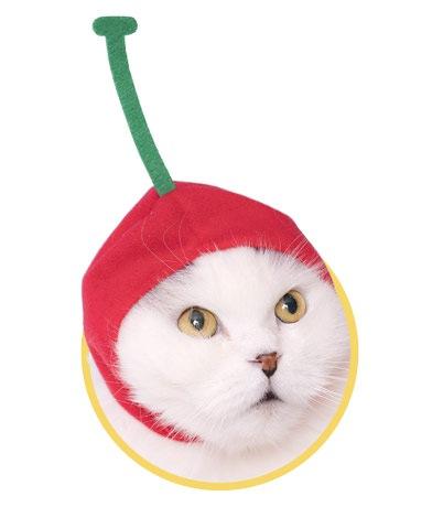 ねこフルーツちゃんさくらんぼ