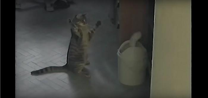 立って応戦する猫