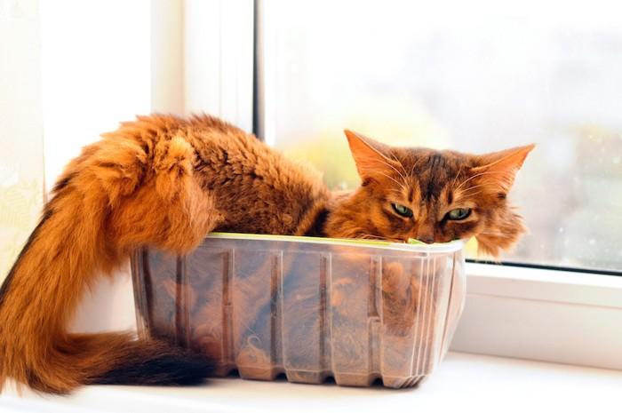 狭い入れ物に入る猫
