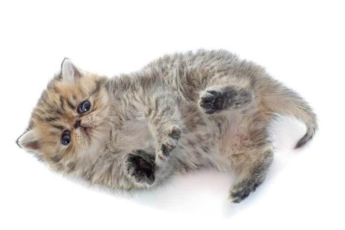 悲しげな顔で寝転ぶ猫