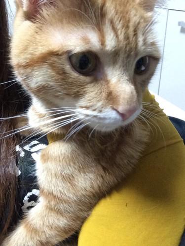 手作りの術後服の猫の写真2
