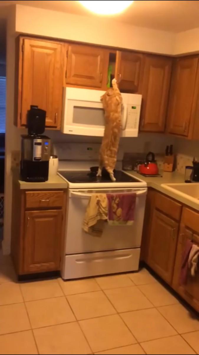戸棚に手をかける猫