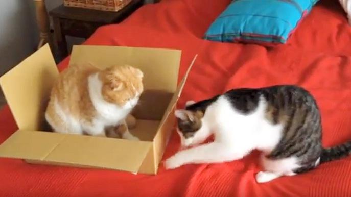 箱の中の猫から威圧感