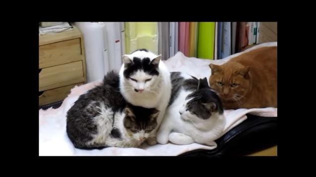 寄り添う4匹の猫