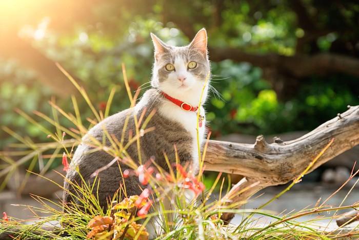 屋外で座ってこちらを見る猫