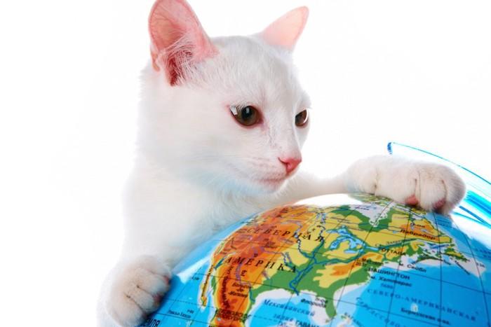 地球儀に手を置いて見つめる白猫
