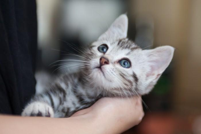 小猫症ではない猫