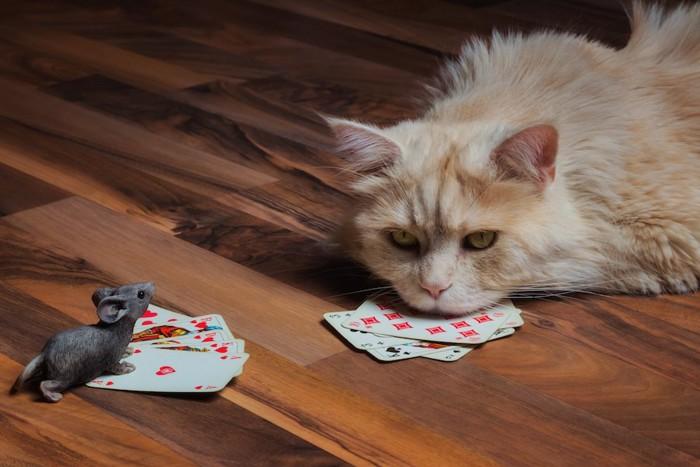 トランプで遊ぶ不機嫌な猫