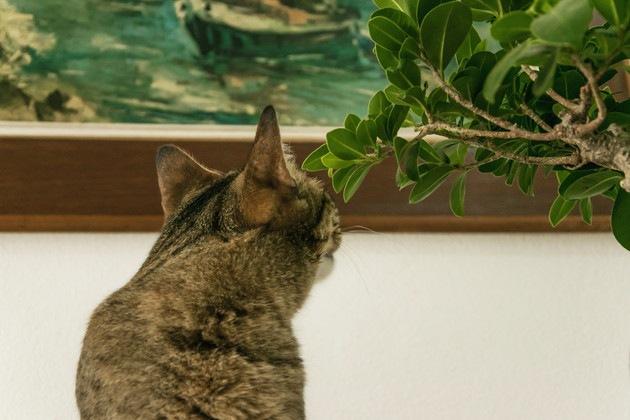 美術館にいる猫