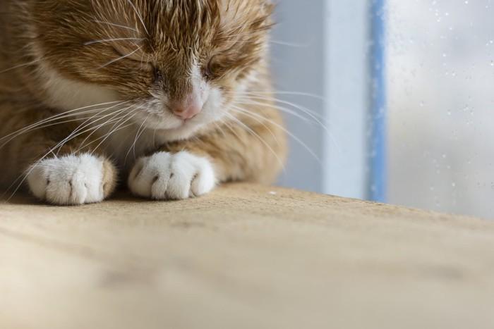 雨の窓際で寝る猫